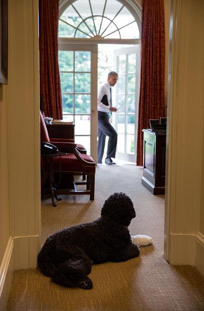 bo-obama-2013