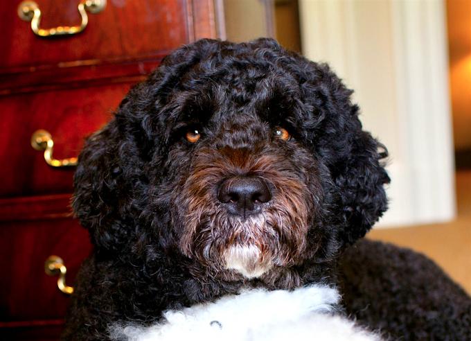 A closeup of Bo, June 20, 2012.