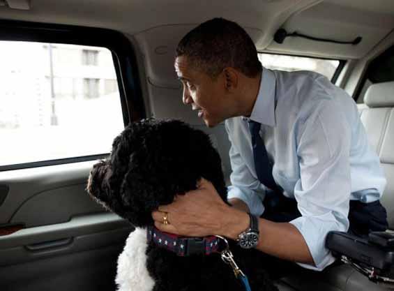 President Obama and Bo.