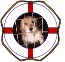 List of dog rescue organizations and websites