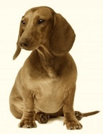 grover-cleveland-dachshunds