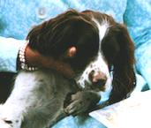 millie-george-bush-dog