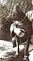 theodore-roosevelt-dog
