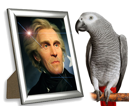 Image result for James Madison had a pet parrot who outlived both him and his wife.