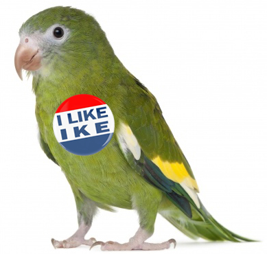 The real Gabby might have looked something like this cute parakeet from 2014.