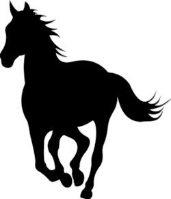 zachary-taylor-pony-apollo