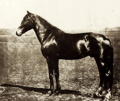 Thruxton might have looked like this. Stock photo of vintage racehorse.