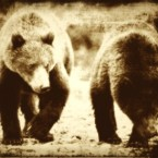 Two bear cubs (stock photo)