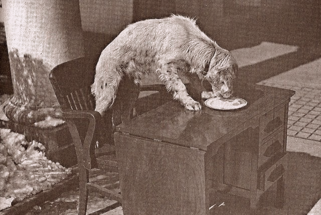 FDR's dog winks tears through a breakfast plate.