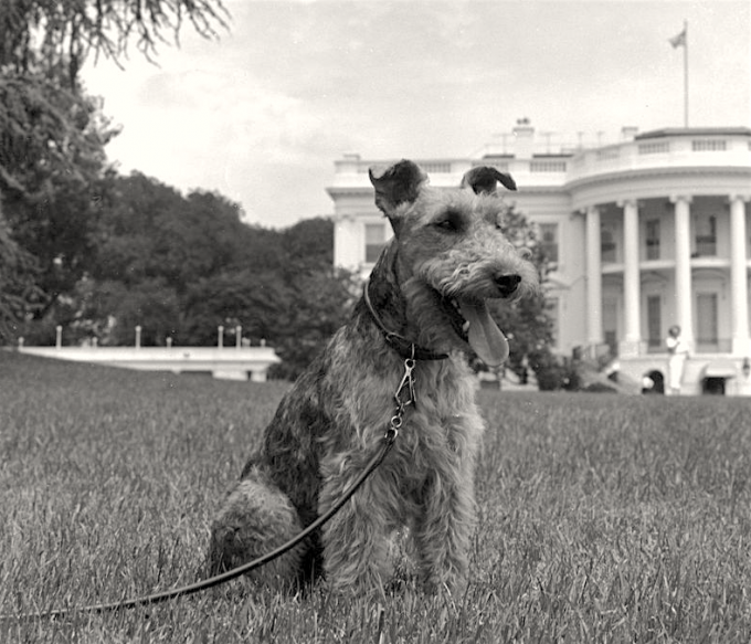 Charlie poses outside the White House, June 22, 1961.