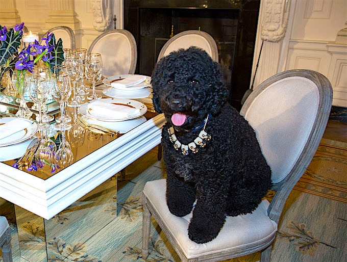 Sunny sit at a table in the State Dining Room of the White House, Feb. 10, 2014. The table settings were used at the State Dinner for President François Hollande of France.